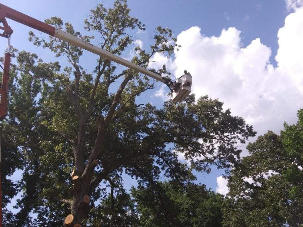 tree trimming in Augusta, GA