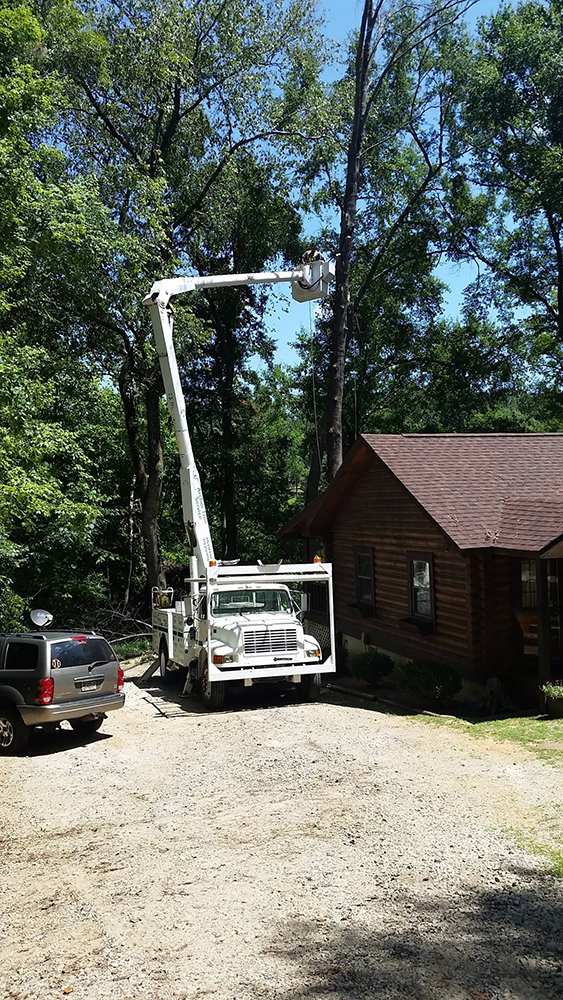 tree removal in Augusta, GA